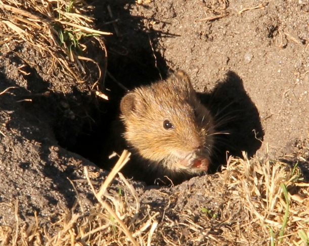 Mouse sits in hole