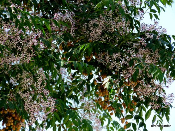 girona-tree-1