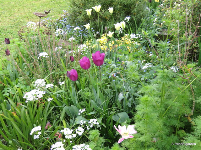 Border in front gdn